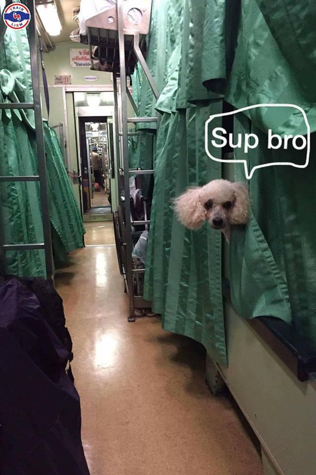 Dogilike.com :: ดราม่าร้อน!! ... ชาวเน็ตโวย พาน้องหมาขึ้นรถไฟตู้นอน มักง่ายทิ้งแพมเพิร์สบนเตียง