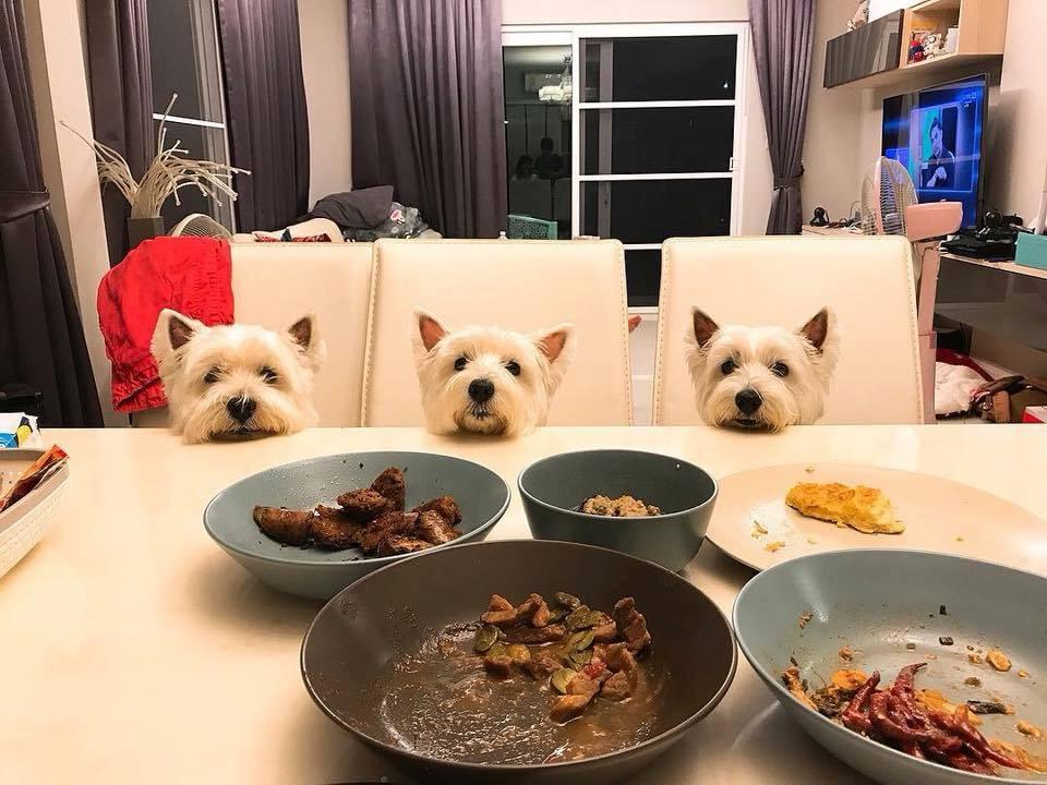 Dogilike.com :: รวมภาพท่าไม้ตายน้องหมาเวลาของของกิน!