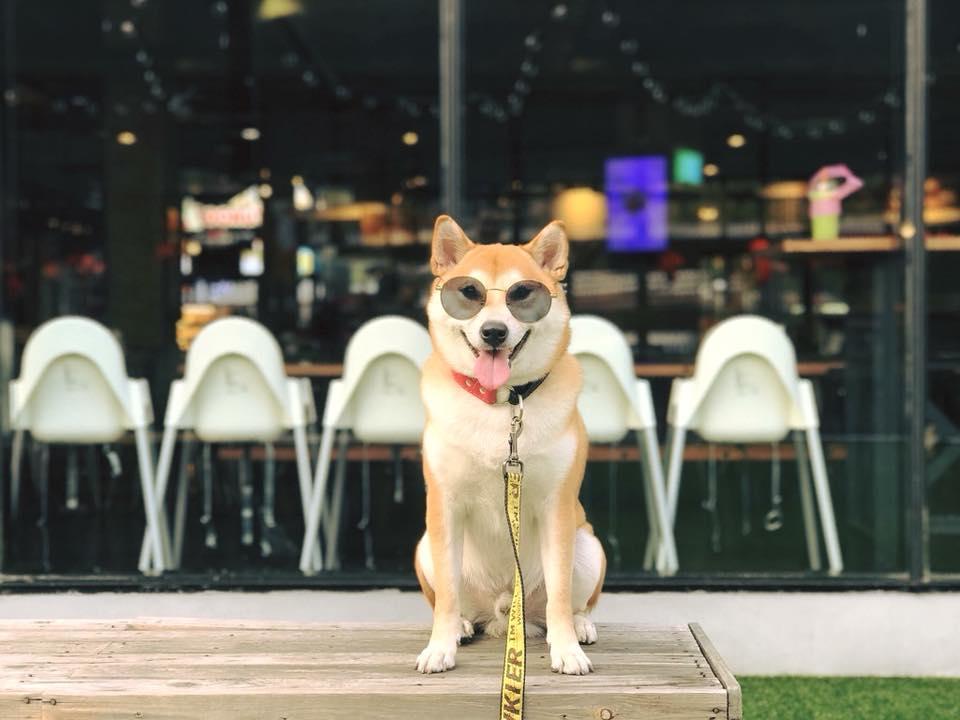 Dogilike.com :: รวมภาพน้องหมาสายหล่อ ... หล่อได้พ่อเต็ม ๆ!