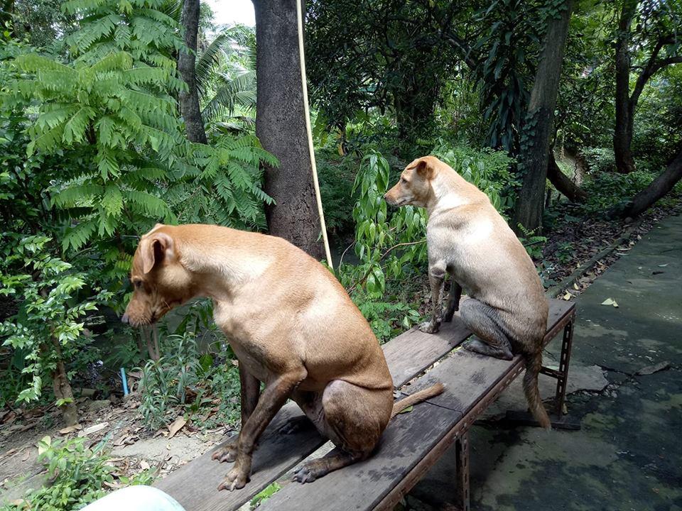 Dogilike.com :: รวมภาพน้องหมาสุดแสบ หนีเที่ยวจนมอมขนาดนี้ กลับบ้านโดนตีแน่!!
