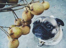Dogilike.com :: รวมภาพ หน้าฮา ๆ เมื่อน้องหมาเห็นของกิน!