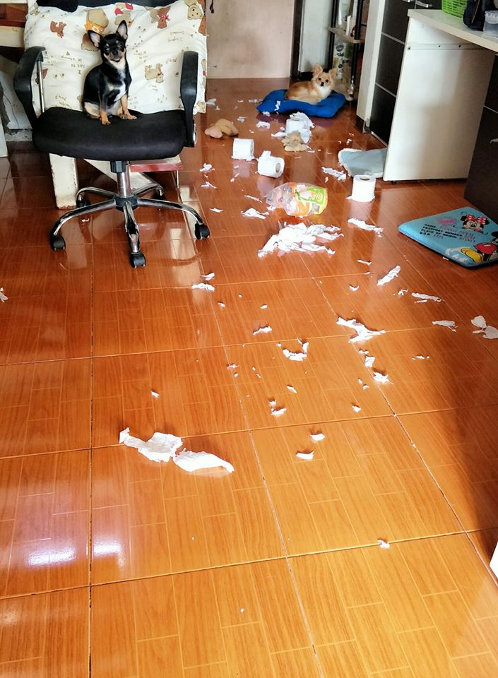 Dogilike.com :: รวมภาพความพัง! เมื่อปล่อยให้น้องหมาอยู่บ้านตัวเดียว