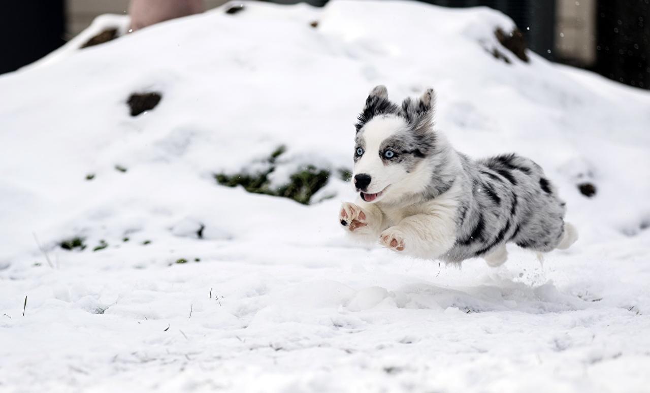Dogilike.com :: รวมภาพความสนุกของน้องหมาในวันหิมะตก