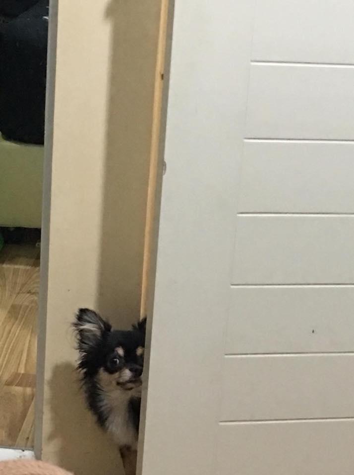 Dogilike.com :: รวมภาพความฮาของน้องหมาสายเผือก