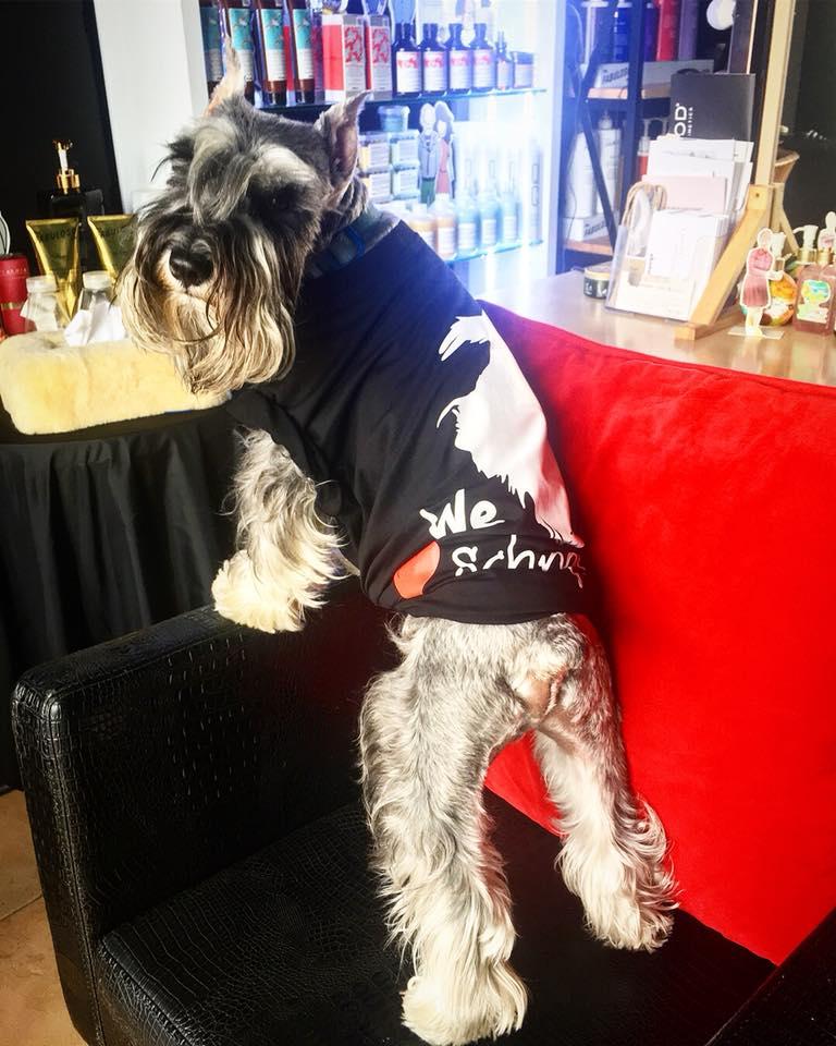 Dogilike.com :: รวมภาพน้องหมาตีหน้าเศร้าหนีความผิด!!