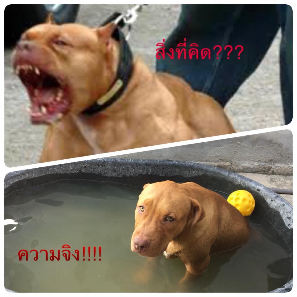 Dogilike.com :: รวมภาพสุดฮา เมื่อน้องหมาหน้าไม่ตรงปก