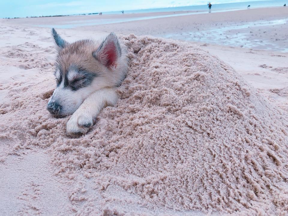 Dogilike.com :: รวมภาพน้องหมากับท่ายาก (มีใครให้ยากกว่านี้อีกไหม!!)