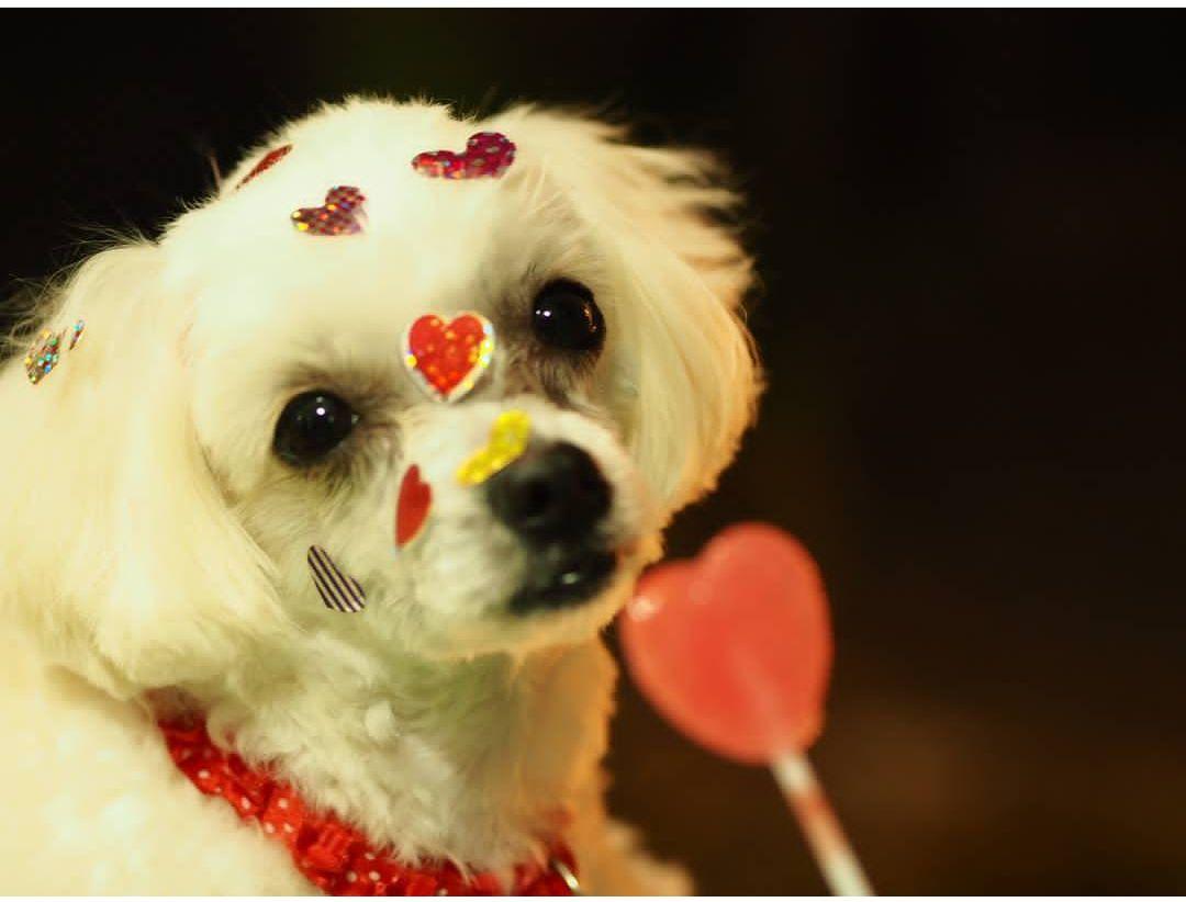 Dogilike.com :: รวมภาพอะไรอยู่กับน้องหมาล้วนน่ารัก