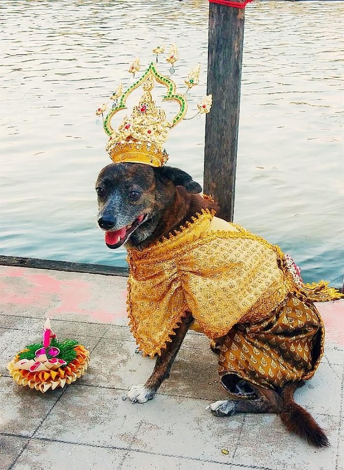 Dogilike.com :: รวมภาพ แฟชั่นสุดจี๊ดของน้องหมาในคืนวันลอยกระทง