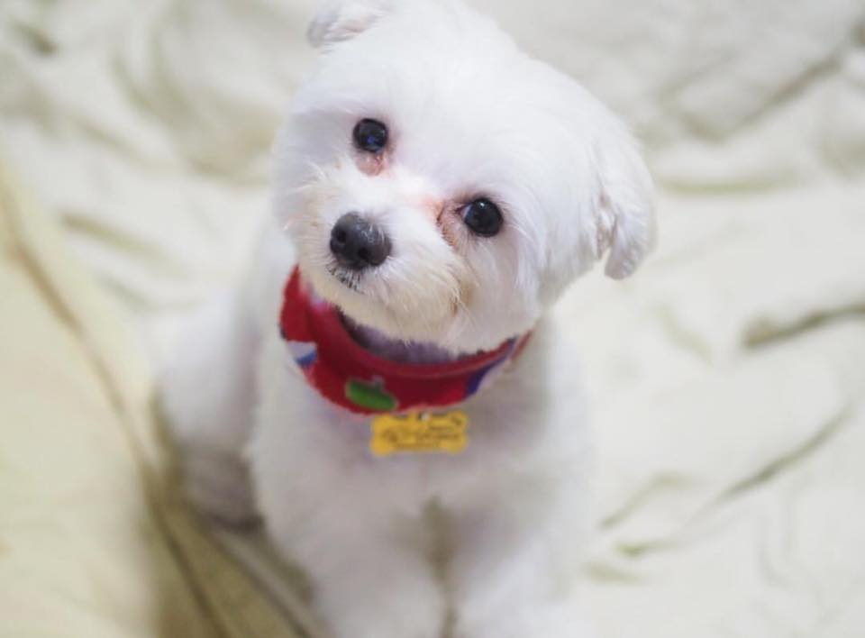 Dogilike.com :: รวมภาพ ... น้องหมาชอบทำหน้าตาขี้สงสัย