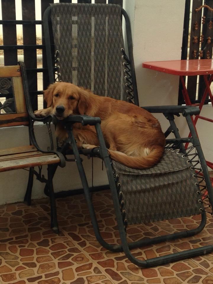 Dogilike.com :: แอบส่องมุมโปรดน้องหมา ไปดูกันว่าชอบแอบนอนตรงไหนบ้าง