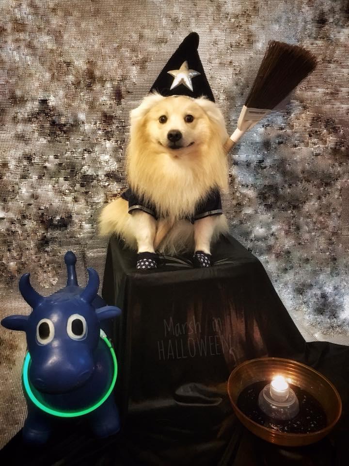 Dogilike.com :: เมื่อน้องหมาอยากไปปาร์ตี้ฮาโลวีน ... ความฮาจึงเกิดขึ้น