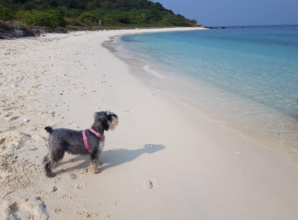 Dogilike.com :: รวมภาพน้องหมาสุดฟินเที่ยวทั่วไทย