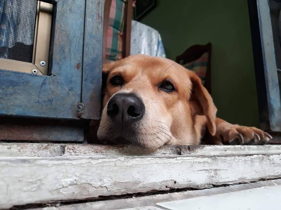 Dogilike.com :: รวมภาพน้องหมาพันทางสุดน่ารัก #ทีมหมาจร