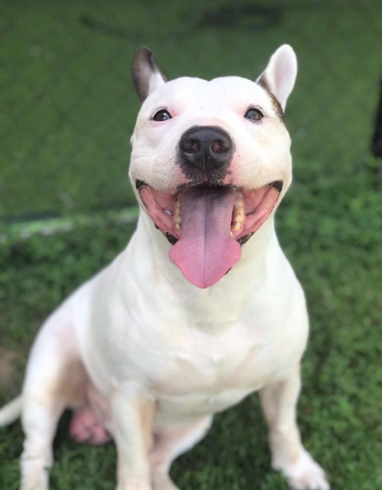 Dogilike.com :: รวมภาพน่ารัก ... น้องหมามอบรอยยิ้มสดใสต้อนรับปี 2019