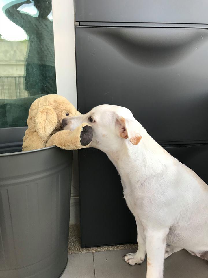 Dogilike.com :: รวมภาพน่ารัก เมื่อน้องหมาติดตุ๊กตาน้องเน่า