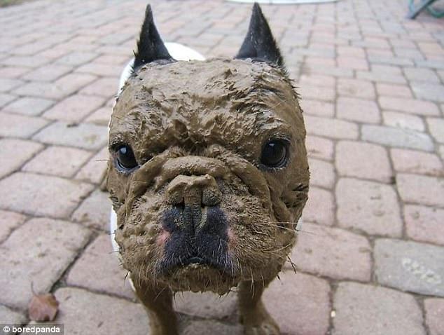 Dogilike.com :: รวมภาพน้องหมากับสายตาอ้อน ๆ เห็นแล้วต้องใจอ่อนทุกที!!