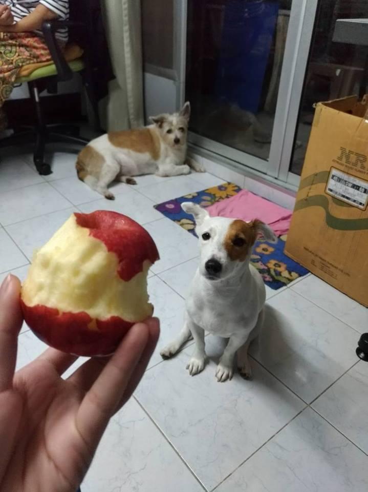 Dogilike.com :: รวมภาพน้องหมาขี้อ้อนขอของกิน