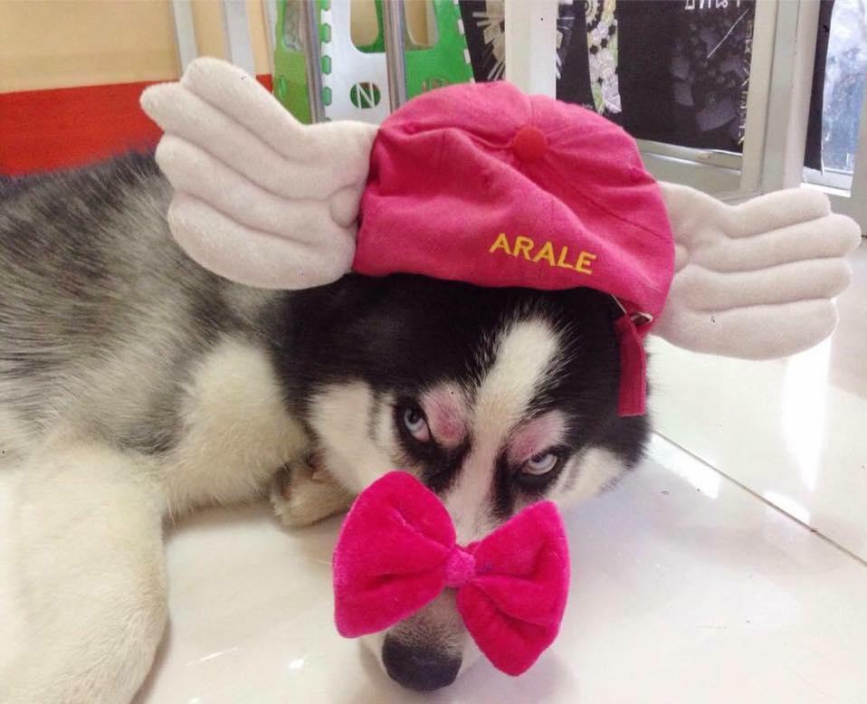 Dogilike.com :: รวมภาพ ... เมื่อน้องหมาทำหน้าร้าย ร้าย