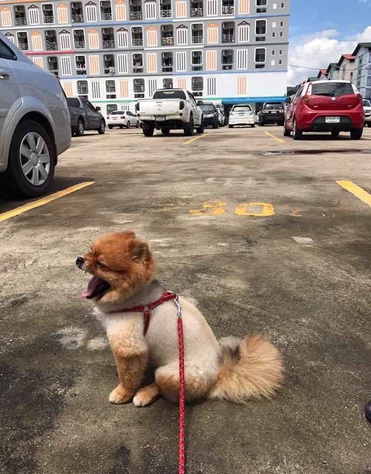 Dogilike.com :: รวมภาพน้องหมาหุ่นถังแก๊ส!! ... เอ็นดูแค่ไหนถามใจดู