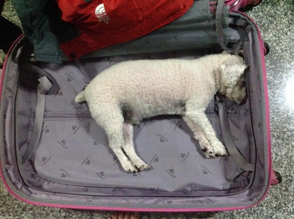 Dogilike.com :: รวมภาพน้องหมาสุดน่ารัก เมื่อได้ยินเจ้าของบอกว่าจะพาไปเที่ยว