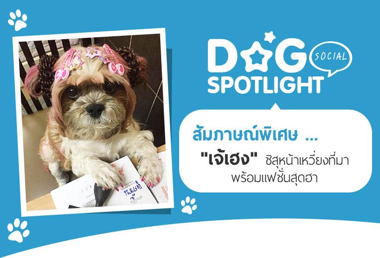 Dogilike.com :: สัมภาษณ์พิเศษ ... เจ้เฮง ชิสุหน้าเหวี่ยงที่มาพร้อมแฟชั่นสุดฮา