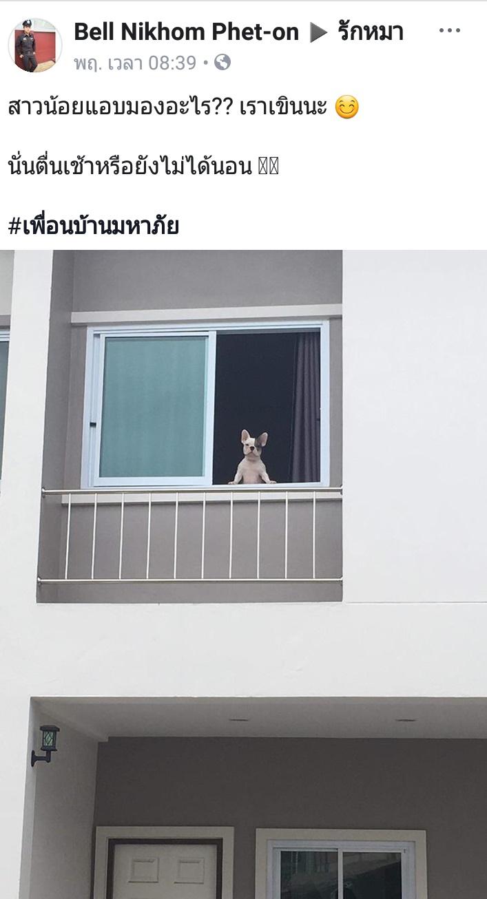 Dogilike.com :: สัมภาษณ์พิเศษ ... ตีมี่ น้องหมาจอมเจ๋อ เจ้าของแฮชแท็ก #เพื่อนบ้านมหาภัย