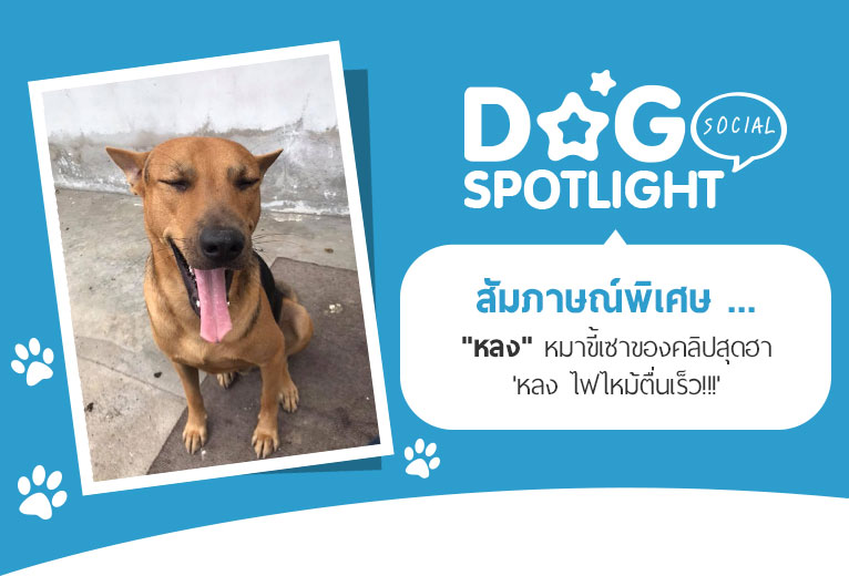 Dogilike.com :: สัมภาษณ์พิเศษ ... หลง หมาขี้เซา เจ้าของคลิปสุดฮา หลง ไฟไหม้ตื่นเร็ว!