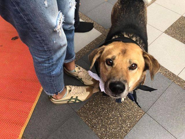 Dogilike.com :: สัมภาษณ์พิเศษ ... เตี้ย น้องหมาเซเลบสีสันของกิจกรรมรับน้อง มช