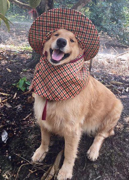 Dogilike.com :: สัมภาษณ์พิเศษ ... จุ๊ฟจิ๊ฟ เซเลบสุดน่ารักแห่งสวนผลไม้เมืองจัน
