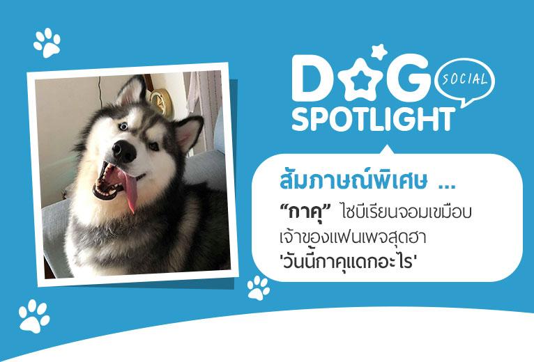 Dogilike.com :: สัมภาษณ์พิเศษ ... กาคุ ไซบีเรียนจอมเขมือบ เจ้าของแฟนเพจสุดฮา วันนี้กาคุแดกอะไร