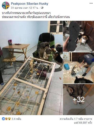 Dogilike.com :: สัมภาษณ์พิเศษ ... เปียกปูน แอนด์เดอะแก็ง กับวีรกรรมแสบ ฮา ปนน่ารัก