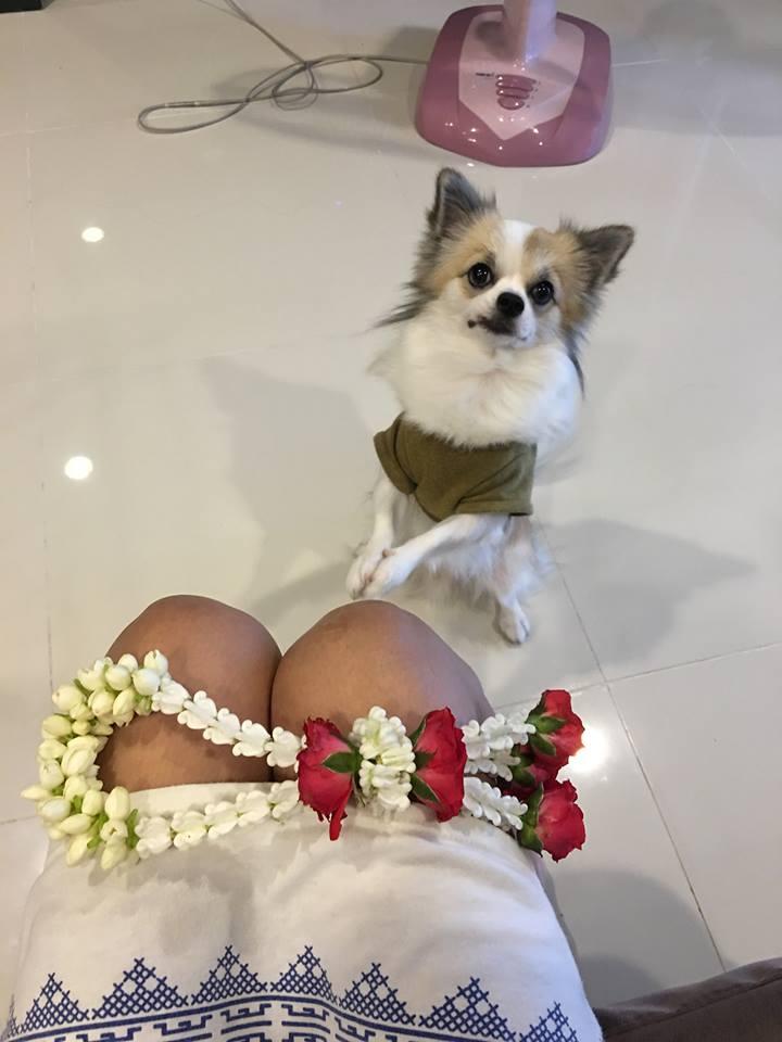 Dogilike.com :: สัมภาษณ์พิเศษ ... รถถัง-กังฟู เจ้าของคลิปน้องหมาขี้ฟ้องที่กำลังฮอตในโซเชียล