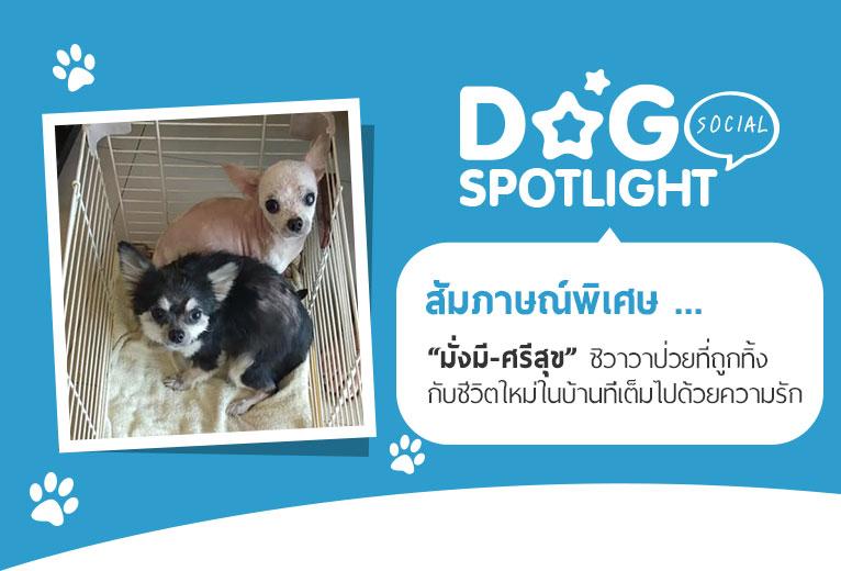 Dogilike.com :: สัมภาษณ์พิเศษ ... มั่งมี-ศรีสุข ชิวาวาป่วยที่ถูกทิ้ง กับชีวิตใหม่ในบ้านที่เต็มไปด้วยความรัก