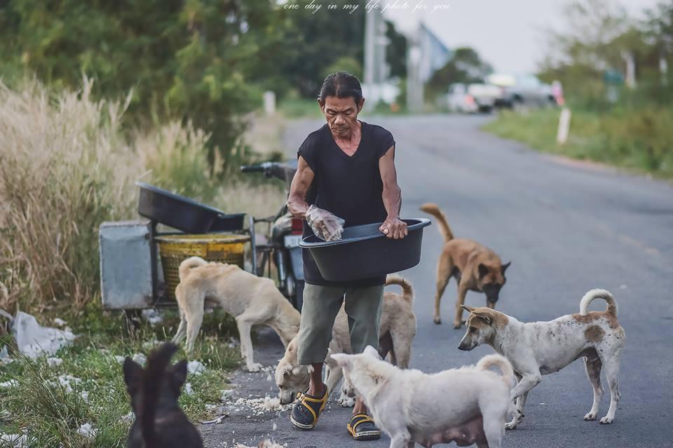 Dogilike.com :: สัมภาษณ์พิเศษ ... ช่างภาพใจดี ถ่าย - โพสต์ ภาพหมาจรในงานแต่งจนหมาได้เจอเจ้าของ