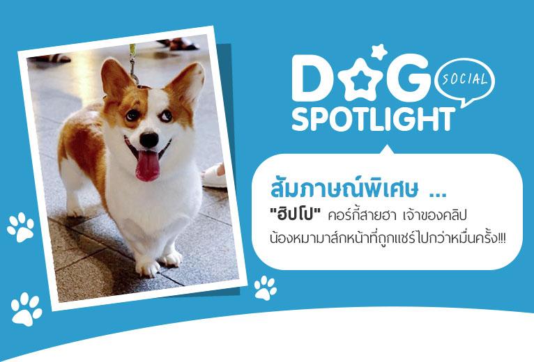 Dogilike.com :: สัมภาษณ์พิเศษ ... ฮิปโป คอร์กี้สายฮา เจ้าของคลิปหมามาส์กหน้าที่ถูกแชร์กว่าหมื่นครั้ง!!!