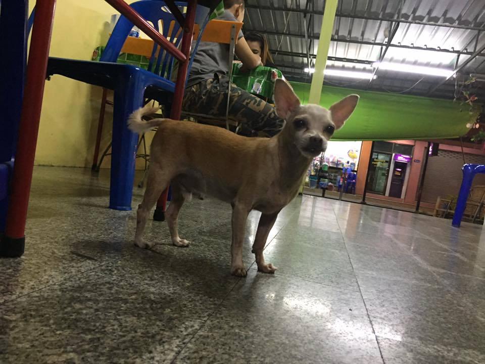 Dogilike.com :: สัมภาษณ์พิเศษ ... ปู่หยอง หมาแก่ตาบอดแต่หัวใจหนุ่มตลอดกาล