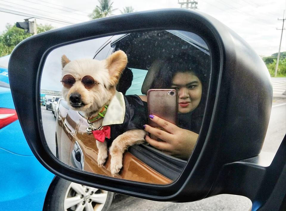 Dogilike.com :: สัมภาษณ์พิเศษ ... โอเว่น น้องหมาสุดซ่า เจ้าของคลิปกระโดดน้ำที่กำลังดังในโลกโซเชียล