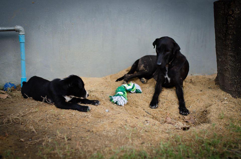 Dogilike.com :: สัมภาษณ์พิเศษ ... นีออน หมาดำแม่ลูกอ่อน ขอโอกาสมีบ้านที่อบอุ่นหลังสุดท้ายในชีวิต