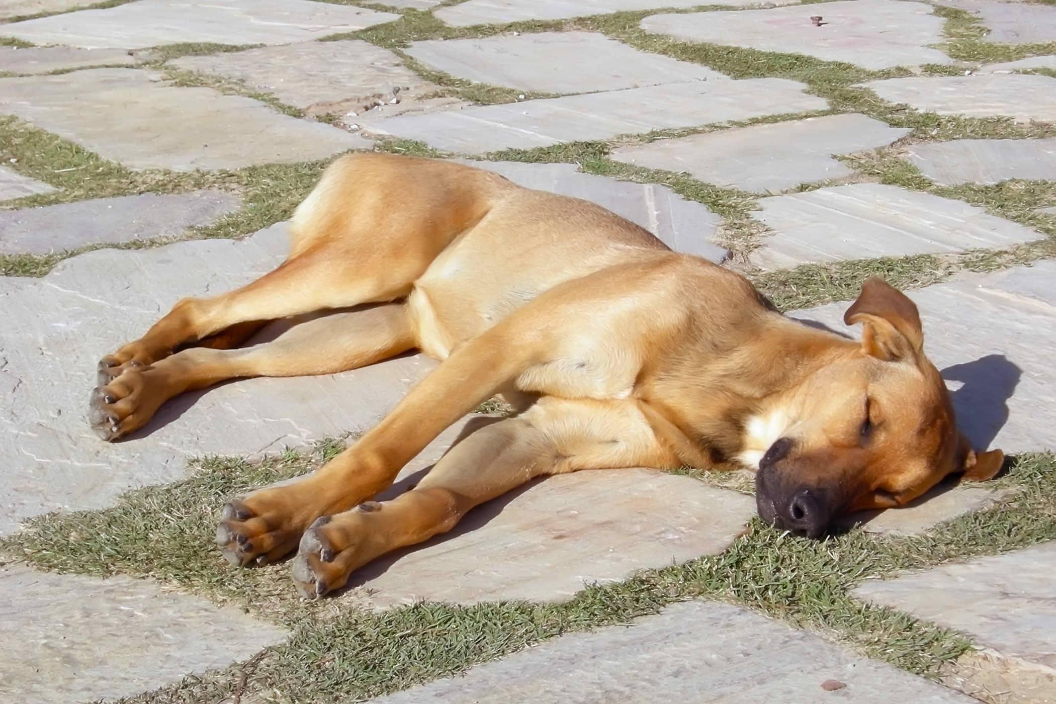 Dogilike.com :: 5 พฤติกรรมทำหมาช็อกได้ในหน้าร้อน(โดยเจ้าของอาจไม่รู้ตัว!!)