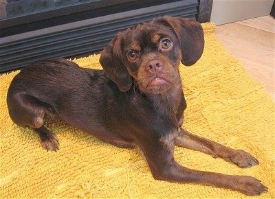 Dogilike.com :: รวมความฮา ... เมื่อน้องหมาเบ้ปากเบอร์แรง