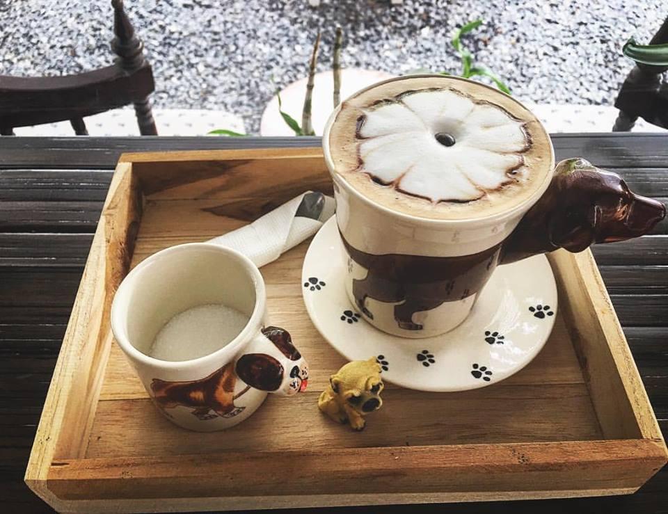 Dogilike.com :: Wagging Tales Cafe� คาเฟ่น้องหมา(จร)สุดน่ารัก @หัวหิน