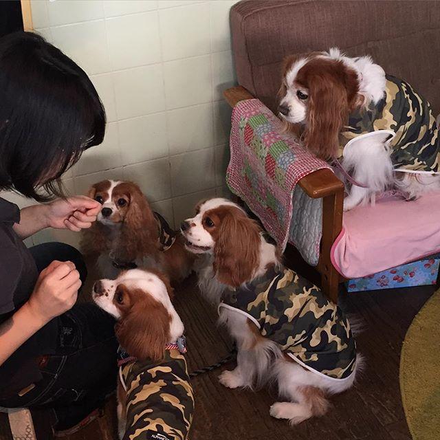 Dogilike.com :: Dogilike Review : 5 คาเฟ่หมาสุดฮิตในโตเกียว ทาสหมาห้ามพลาด!!