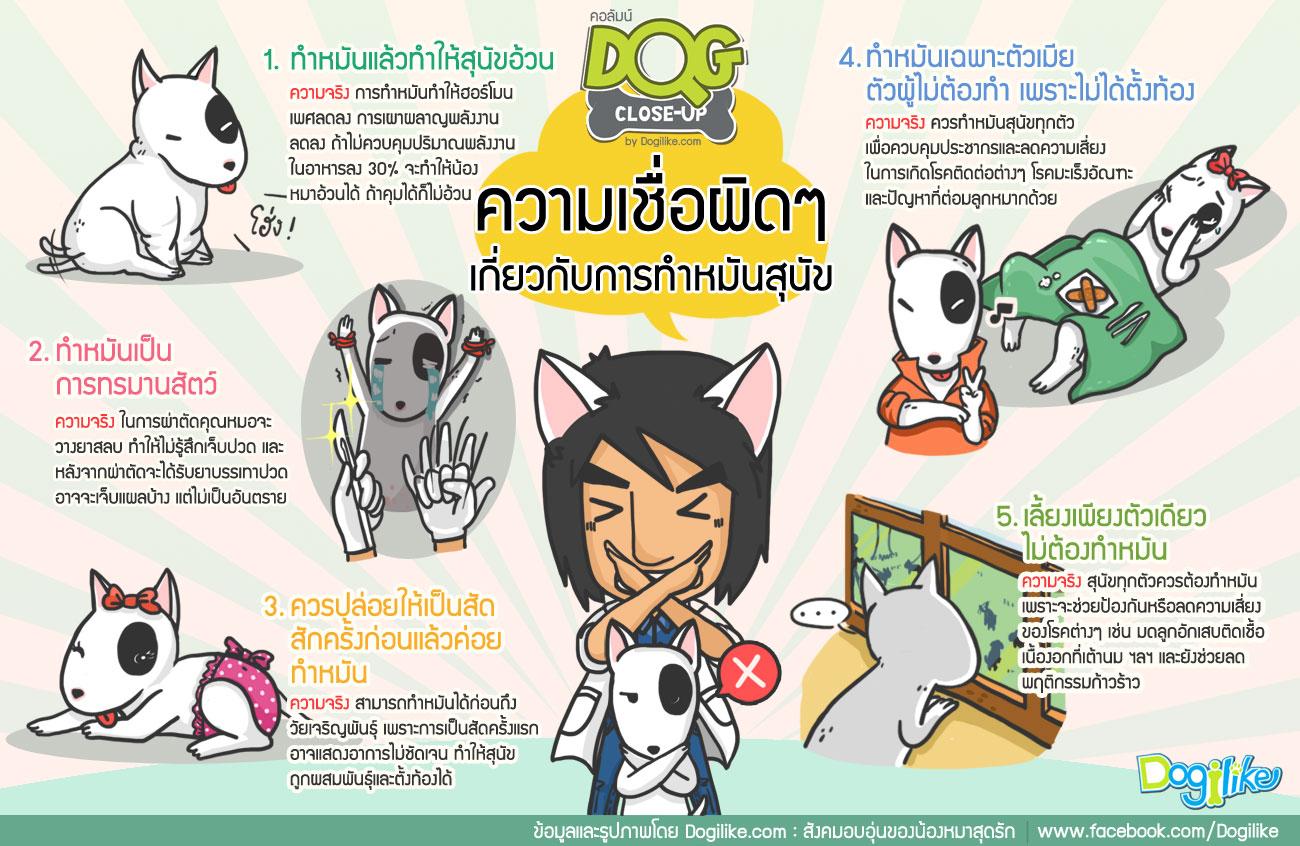Dogilike.com :: ลดปัญหาโรคระบาด - ลดปัญหาน้องหมาจร ได้ด้วยโครงการทำหมันฟรีของ กทม.