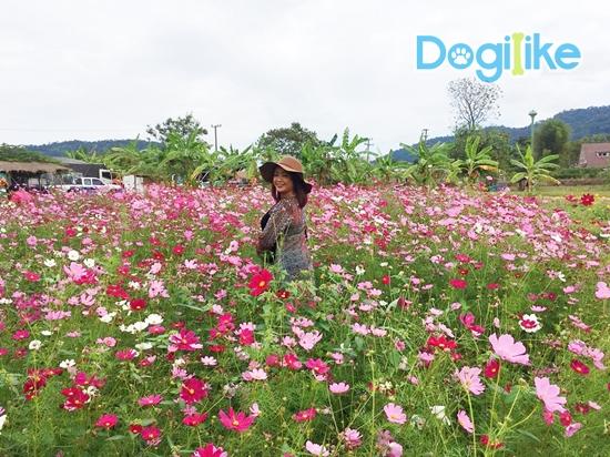 Dogilike.com :: รีวิวทริป พาหมาเที่ยววังน้ำเขียวเที่ยวง่าย ใกล้กรุง!