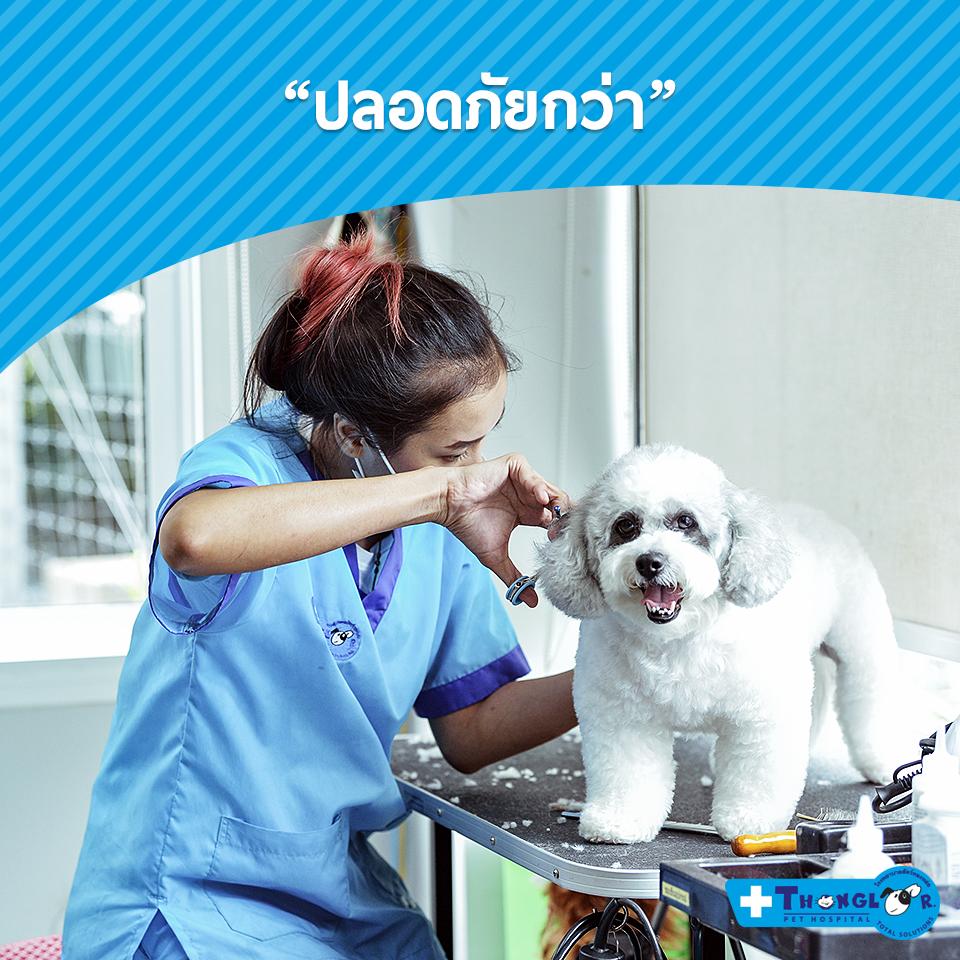 Dogilike.com :: อาบน้ำตัดขนธรรมดาโลกไม่จำ มิติใหม่แห่งการอาบน้ำตัดขน  by โรงพยาบาลสัตว์ทองหล่อ