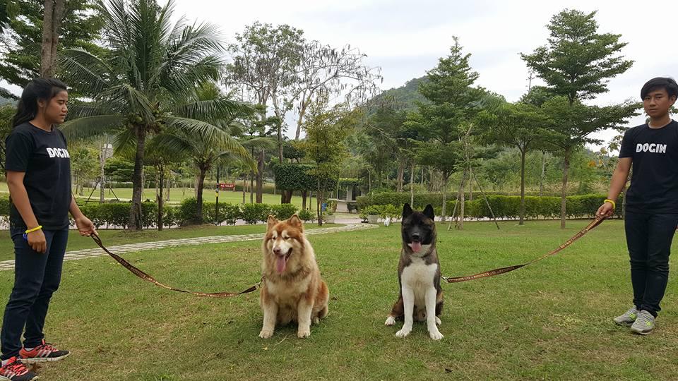 Dogilike.com :: ครั้งแรกในไทย! ไม่ไปไม่ได้  วันรวมฝูงสุนัขพันธุ์ใหญ่ DOGIN สวนผึ้ง ราชบุรี