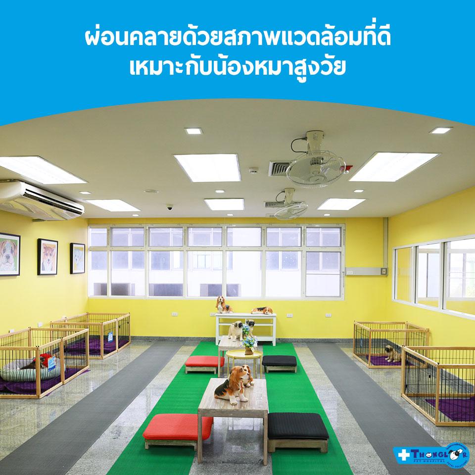 Dogilike.com :: ยิ่งแก่ยิ่งรัก ศูนย์ดูแลสัตว์เลี้ยงสูงวัย  Senior Care Center by โรงพยาบาลสัตว์ทองหล่อ
