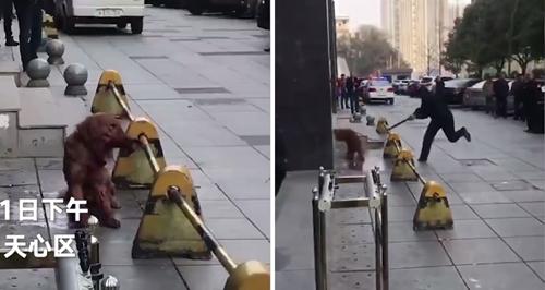 Dogilike.com :: ชาวเน็ตด่าสนั่น! ตำรวจจีนสุดโหดใช้กระบองตีสุนัขโกลเด้นฯ จนตาย (มีคลิป)