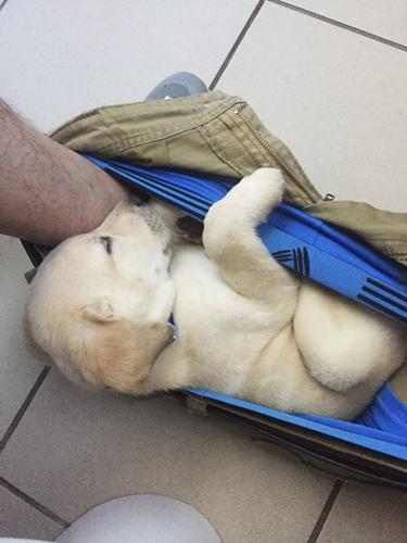 Dogilike.com :: ใครดูก็หยุดขำไม่ได้ เมื่อเห็นพัฒนาการขี้อ้อนของเจ้าตูบตัวนี้ !